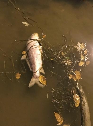 2016-9-11-dead-fish