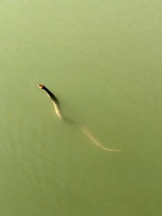 10-16-snake
