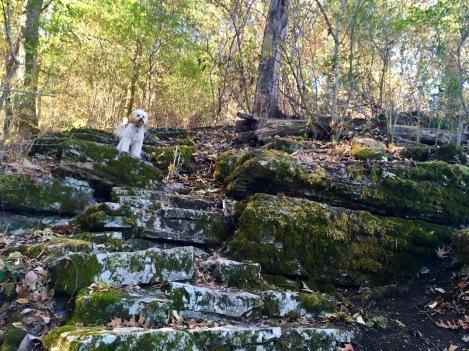2013-10-23-trail-steps