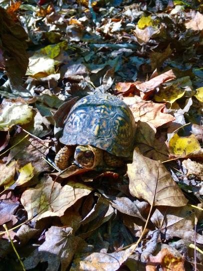 2016-10-17-turtle