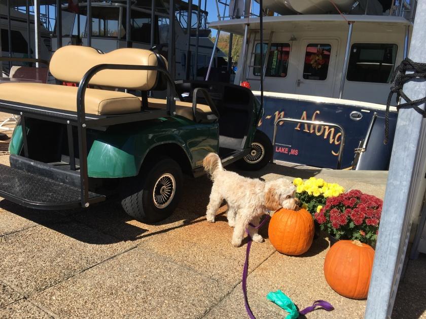 2016-10-21-inch-along-pumpkins