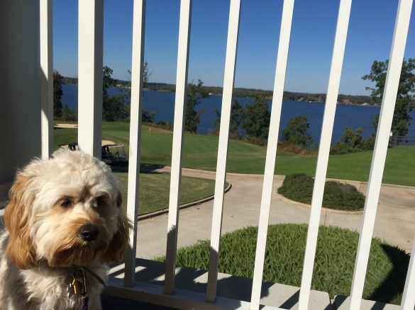 2016-10-23-ziggy-golf-club-prison