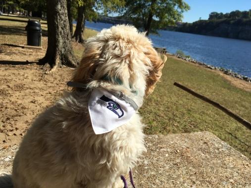 2016-10-23-ziggy-seahawks