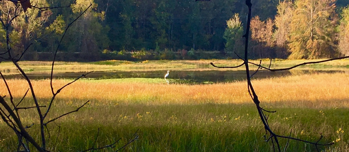 2016-10-29-wetlands-feature