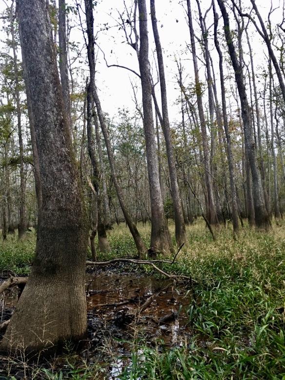 2016-11-12-tupelo-grove