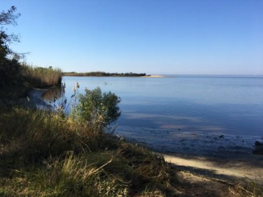 2016-11-16-hike-along-bayswamp
