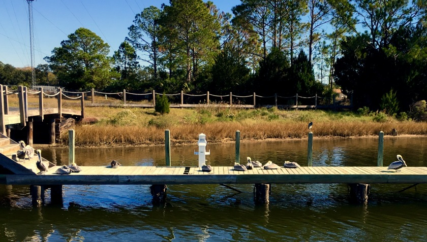 2016-12-10-pelicans-sittin-on-the-dock-o-the-bay