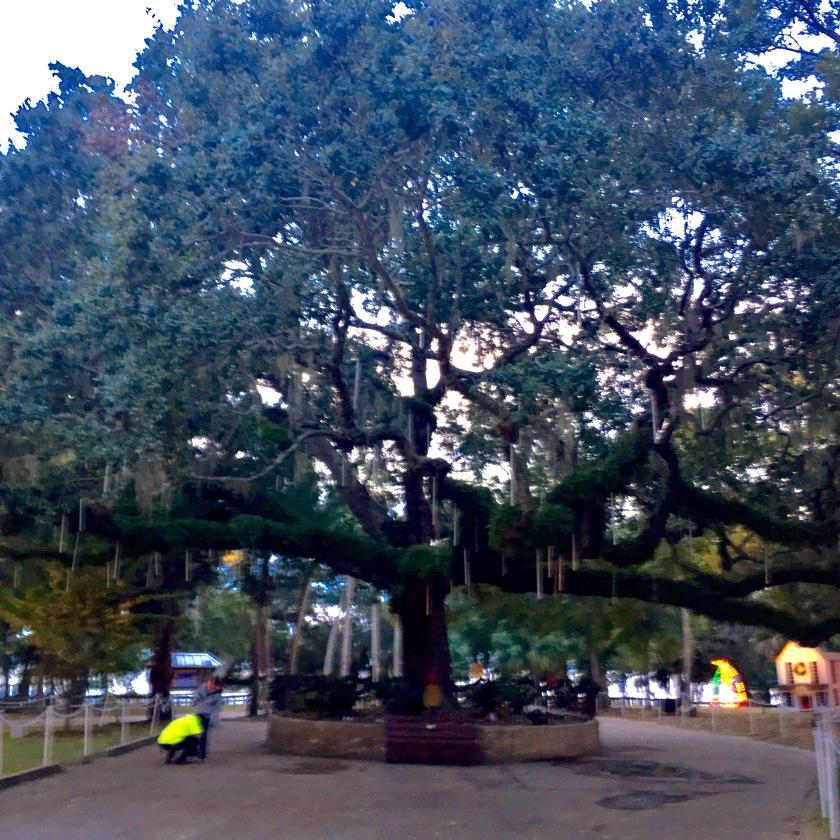 2016-12-8-old-oak