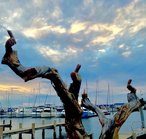 2016-12-8-pelican-tree