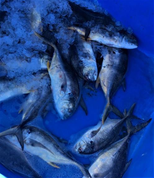 1-15-fish