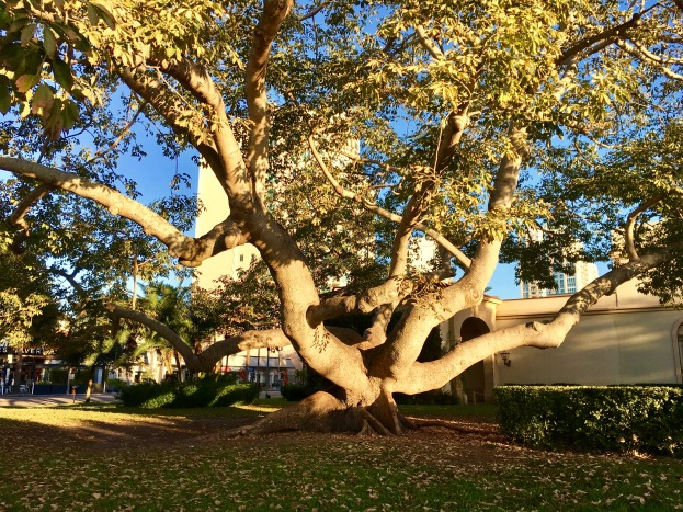 1-8-2017-tree