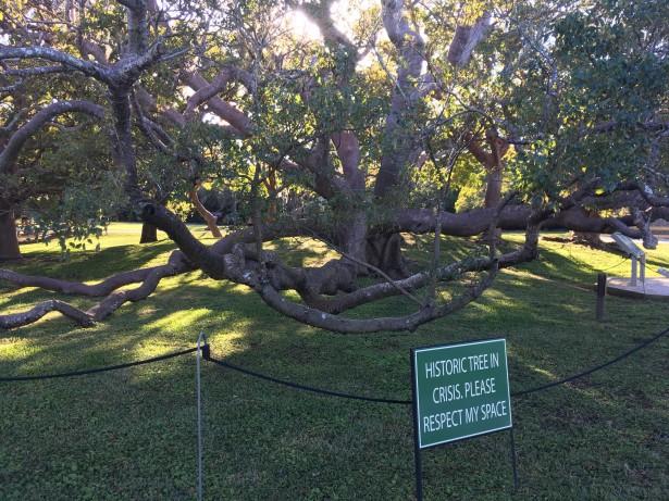 2017-1-12-sign-tree