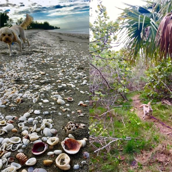 2017-1-16-beach-dog-trail-dog-lucky-dog