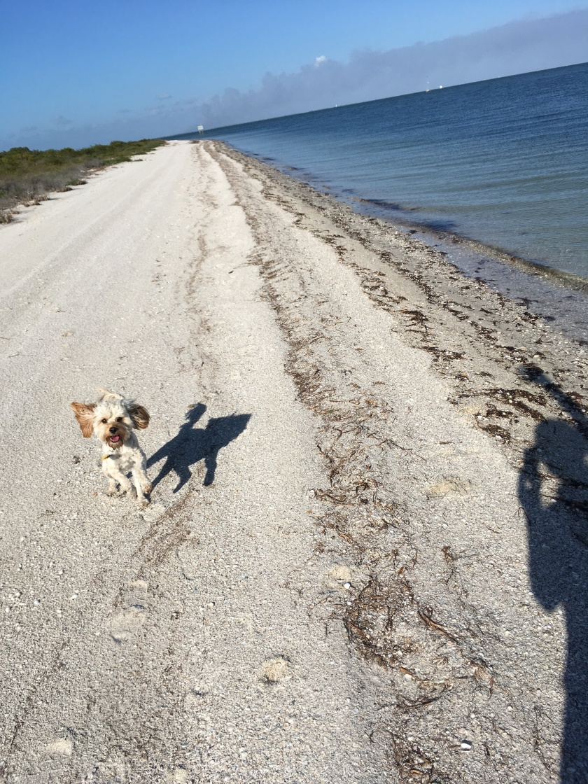 2017-1-24-beach-walk-z-shadow
