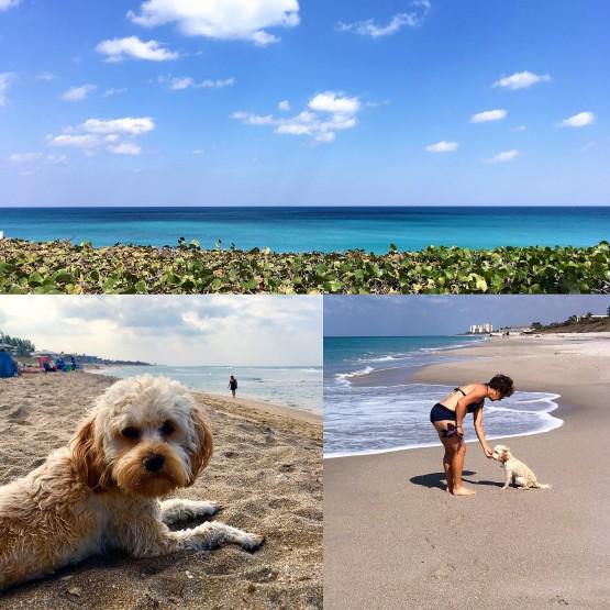 2017-2-16-beach-trio