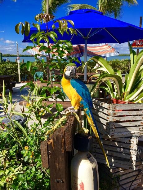 2017-2-23-parrot