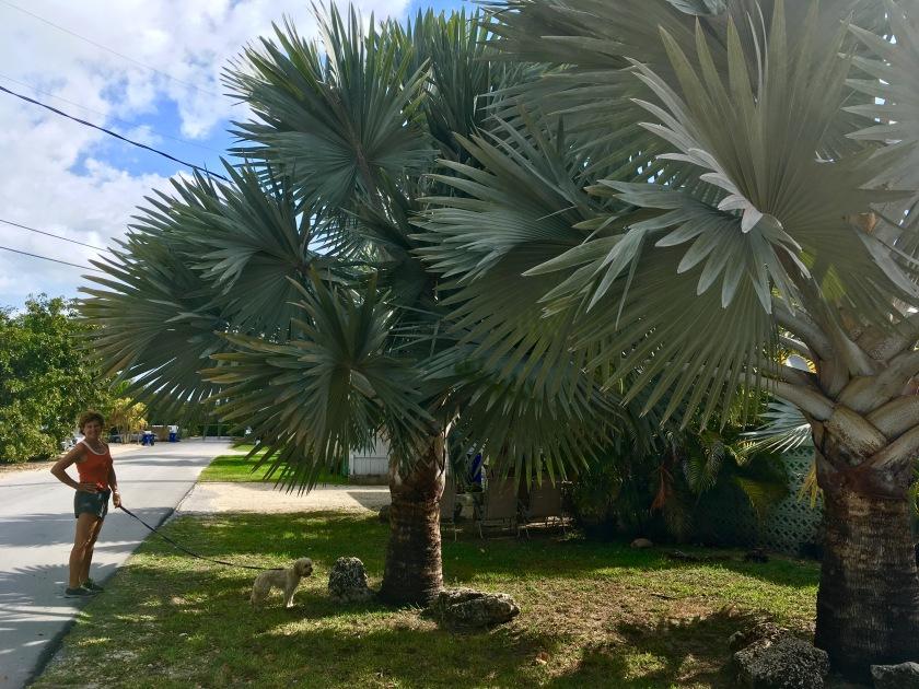2017-3-12 palms b z