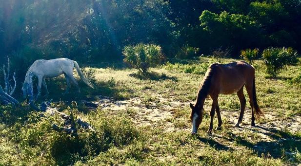 2017-4-18 2 horses