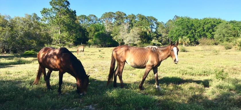 2017-4-18 3 horses