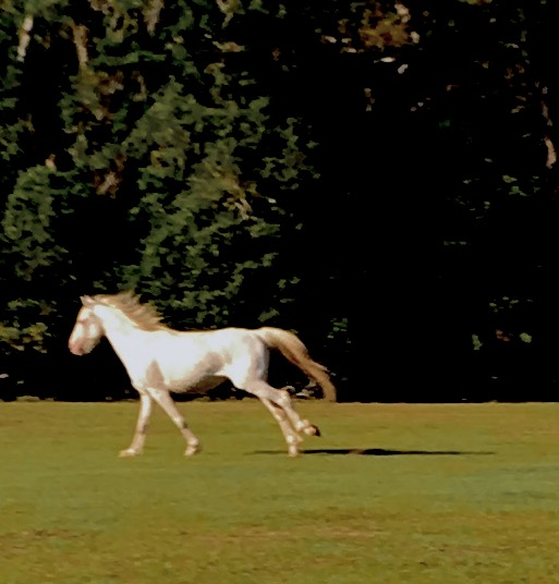 2017-4-18 white horse run