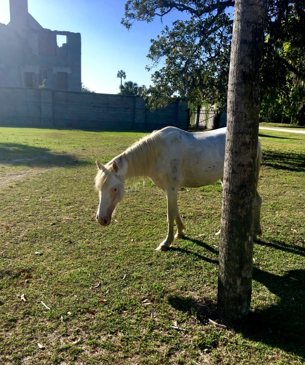 2017-4-18 white horse tree