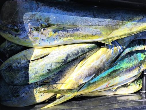 4-20 fish