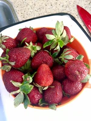 2017-5-3 strawberry