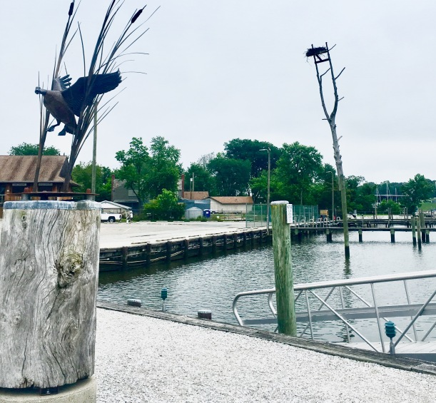 2017-5-30 bird lover marina