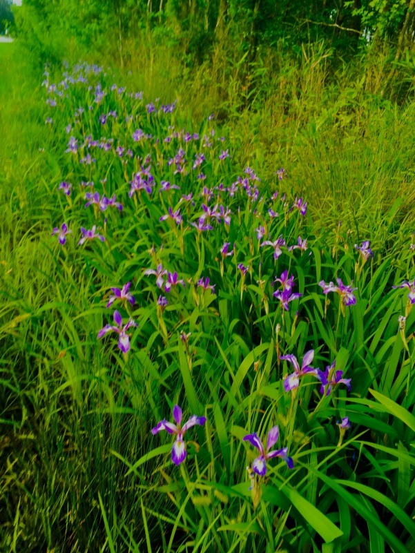 2017-5-9 ditch flowers