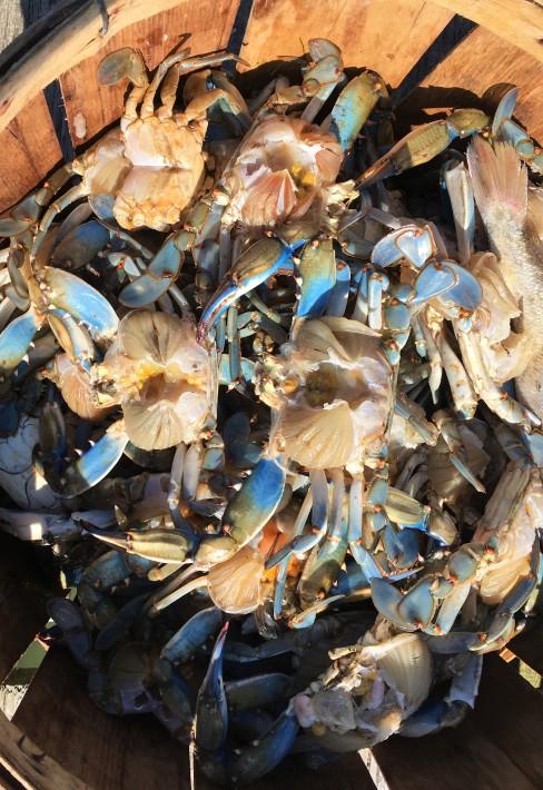 5-17 crab2