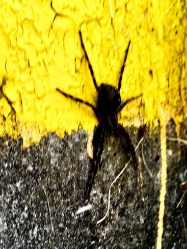 2017-7-12 spider lock