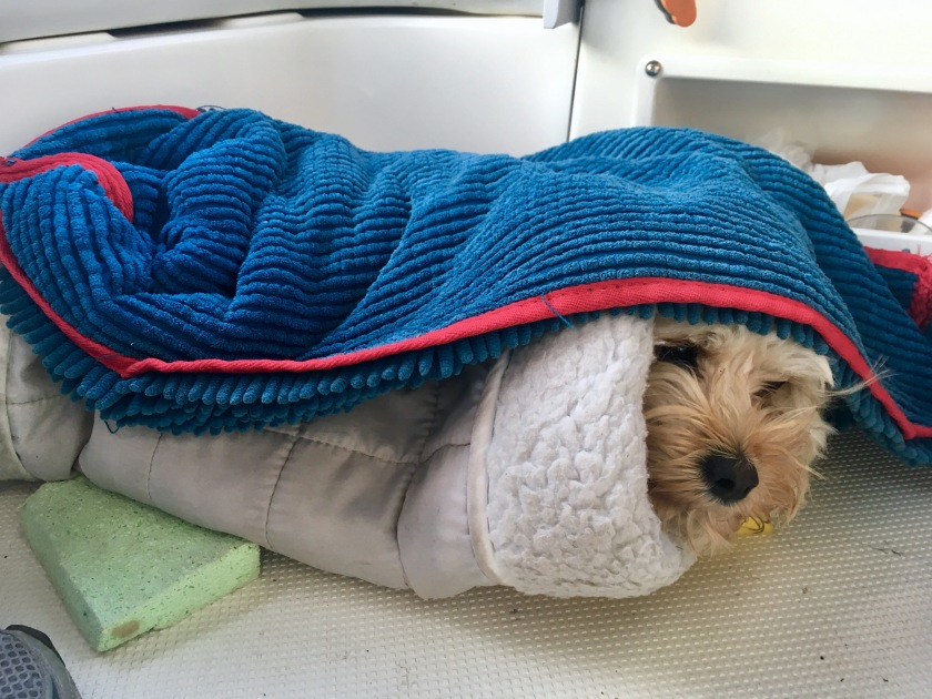 2017-9-19 cold dog
